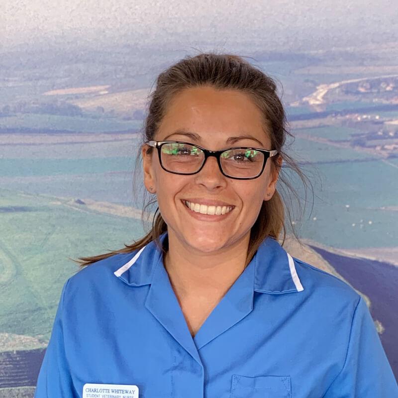 castle-vets-dorchester-weymouth-staff-charlotte-whiteway