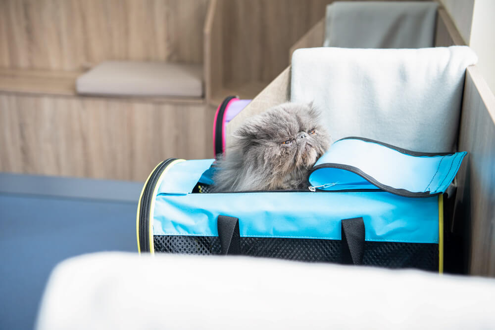castle-veterinary-group-dorchester-cat-friendly-clinic-3